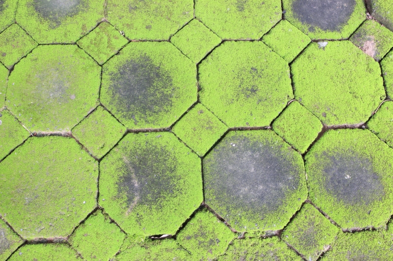groene aanslag tegels